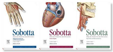 gehirn aufteilung anatomisch